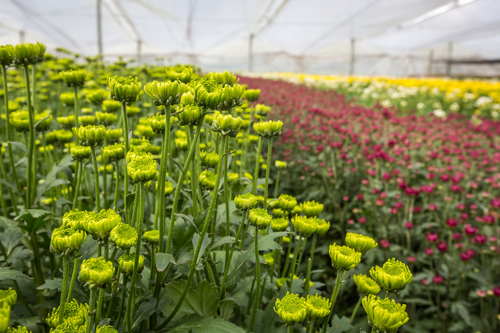 floricultura colombia 2