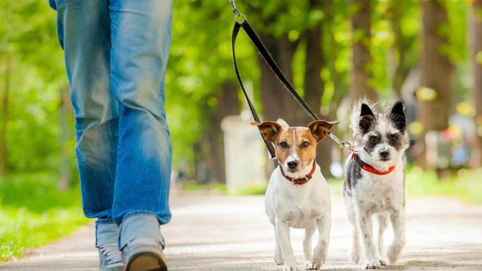 pasear-perros-mascotas-paseo-diversion