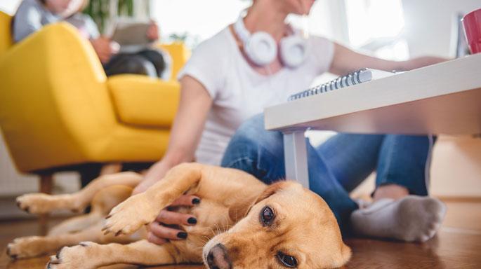 perro-jugando-en-casa-trabajo-mascota