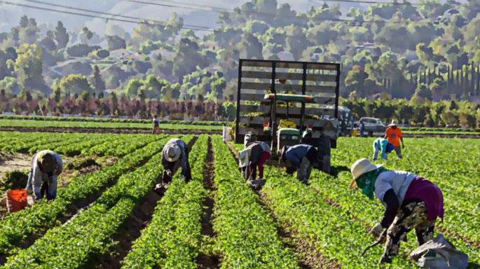 trabajadores-migrantes-agricultura-italia